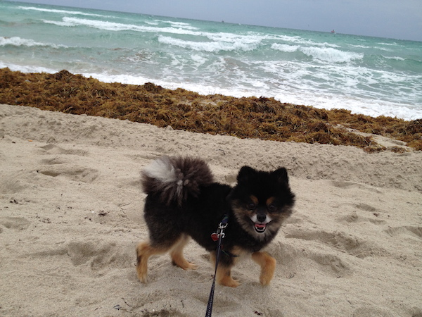 Rascal says there's waves today.